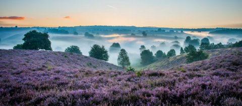 nationale parken, nederland, overzicht, natuur, hiken