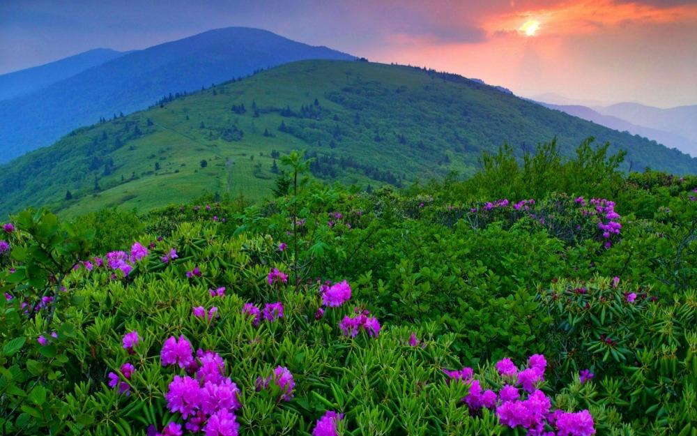 appalachian trail, vermont, wandelen, amerika, verenigde staten