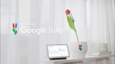 Google Tulip Keukenhof