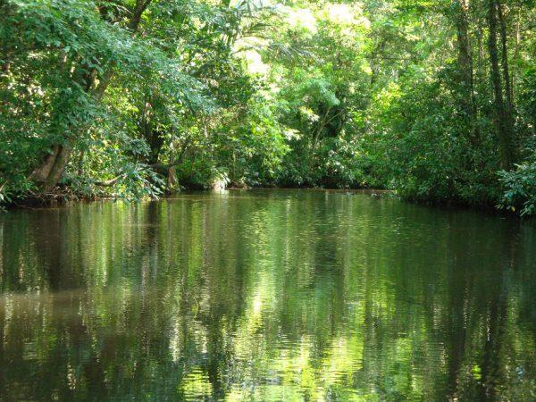 Tortuguero National Park, nationale parken, costa rica