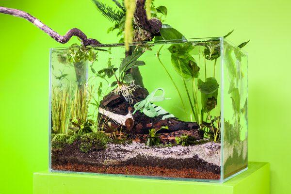 oude, sneakers, aquarium, kunst, ecologie, tweede leven