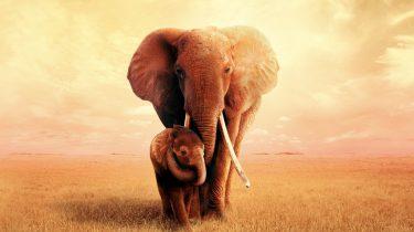 the elephant queen, apple tv, natuurdocumentaire, recensie