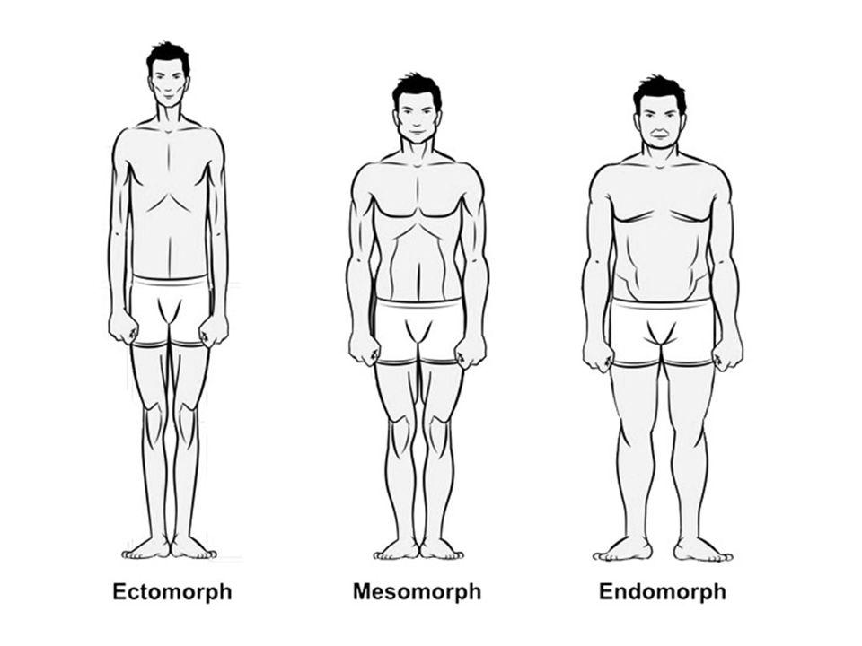 somatotypes, trainen, lichaamsbouw, ectomorph, mesomorph, endomorph, lichaamstypen, eten